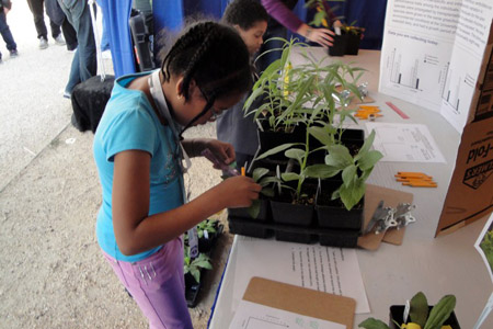 Students conduct research on variation in plants at Sarah Wood's exhibit.