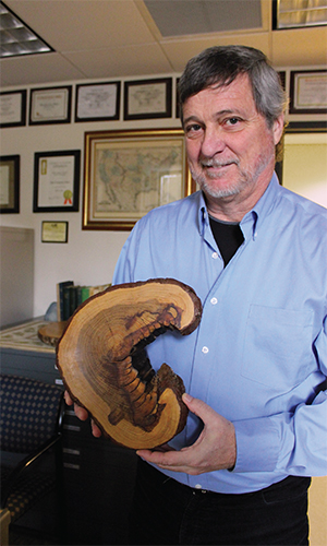Professor Grissino-Mayer displays a cross section of table mountain pine, a very fire-adapted species endemic to the Appalachians. This slice shows 13 fire events dating back to the early 1800s.
