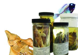 Fish specimen in jars